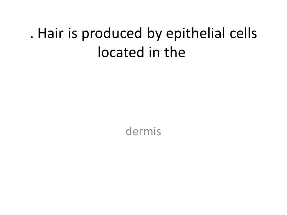 . Hair is produced by epithelial cells located in the