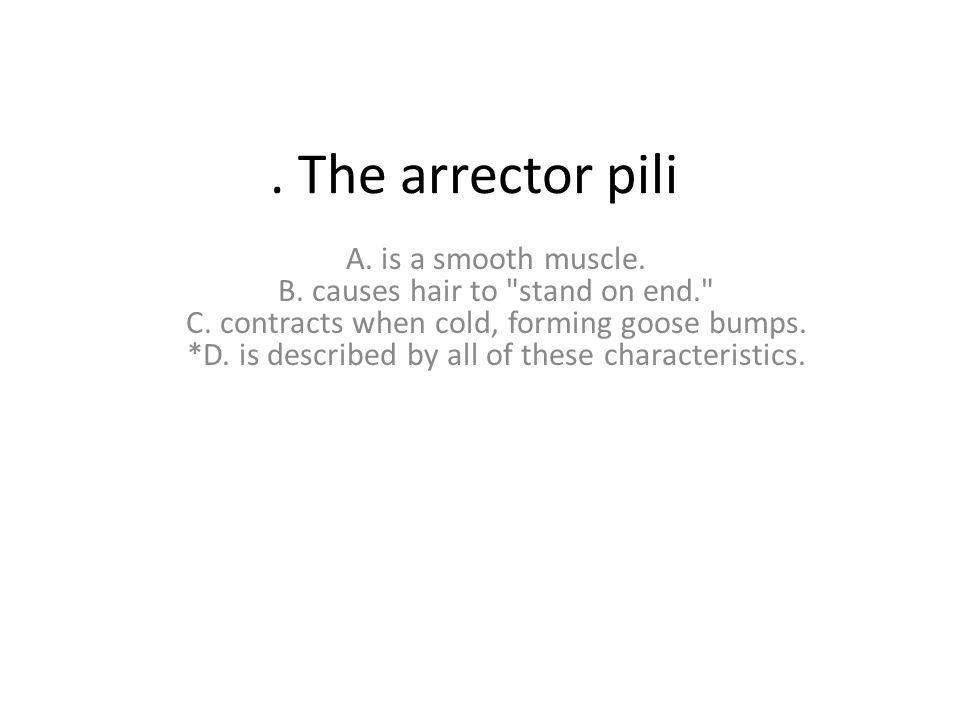 . The arrector pili