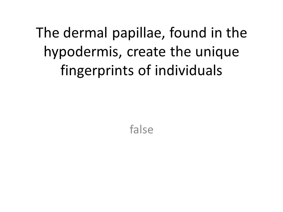 The dermal papillae, found in the hypodermis, create the unique fingerprints of individuals