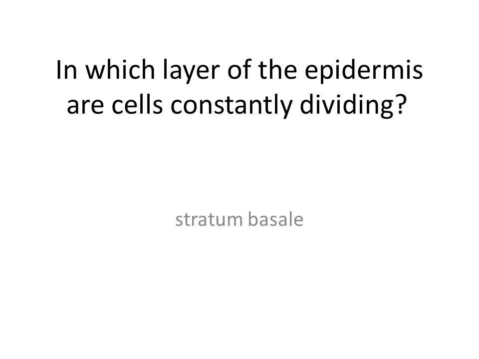 In which layer of the epidermis are cells constantly dividing