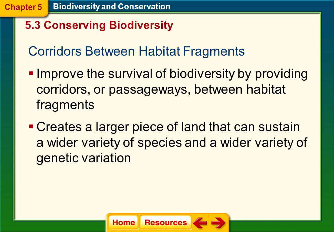 Corridors Between Habitat Fragments
