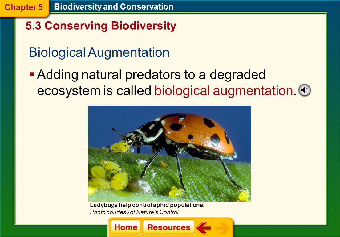 Biological Augmentation