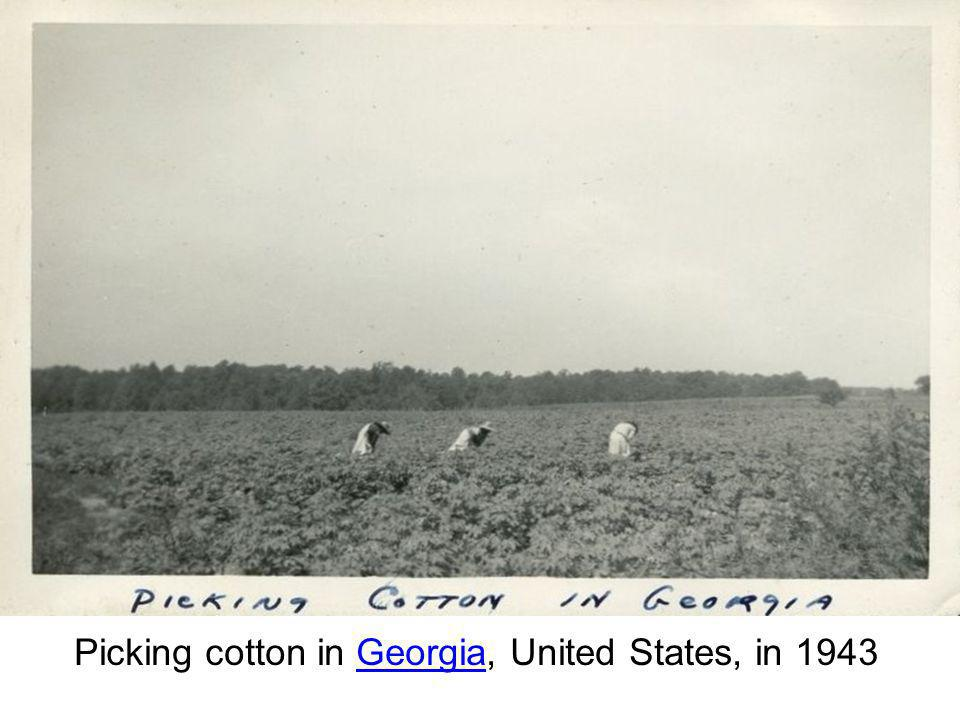 Picking cotton in Georgia, United States, in 1943
