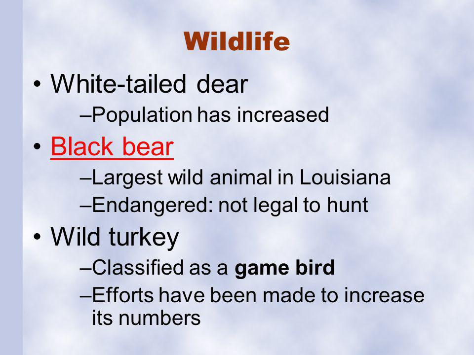 Wildlife Dove Quail Migratory waterfowl Alligators