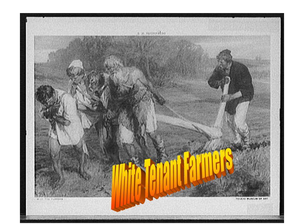 White Tenant Farmers
