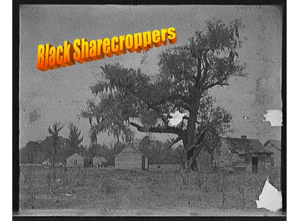 Black Sharecroppers