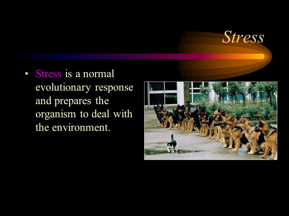 Stress Stress is a normal evolutionary response and prepares the organism to deal with the environment.