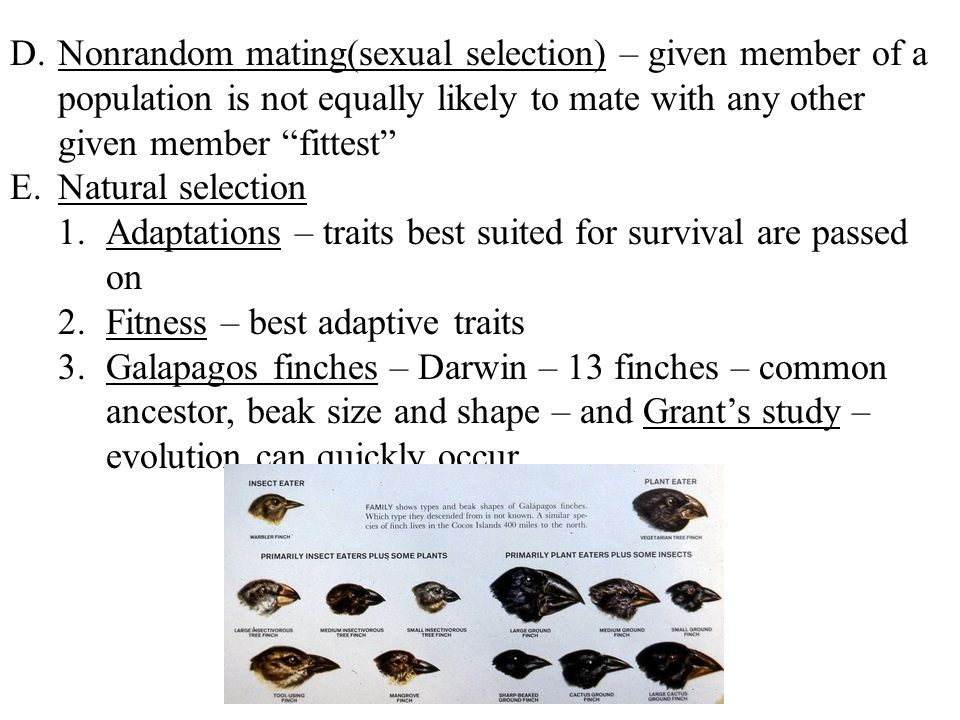 Nonrandom mating(sexual selection) – given member of a population is not equally likely to mate with any other given member fittest