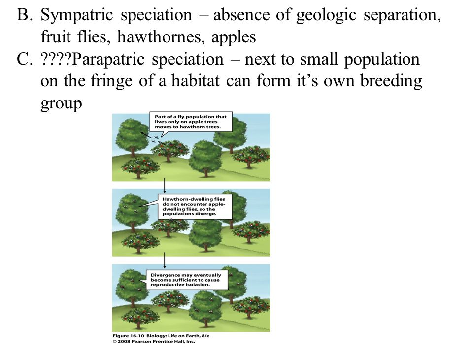 Sympatric speciation – absence of geologic separation, fruit flies, hawthornes, apples