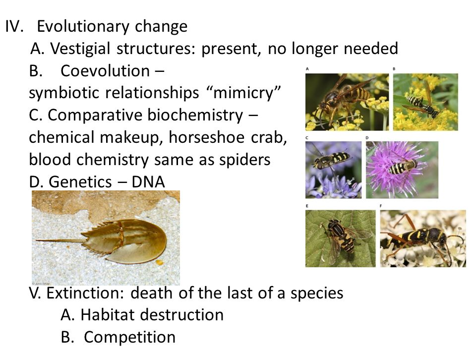 Evolutionary change A. Vestigial structures: present, no longer needed. Coevolution – symbiotic relationships mimicry