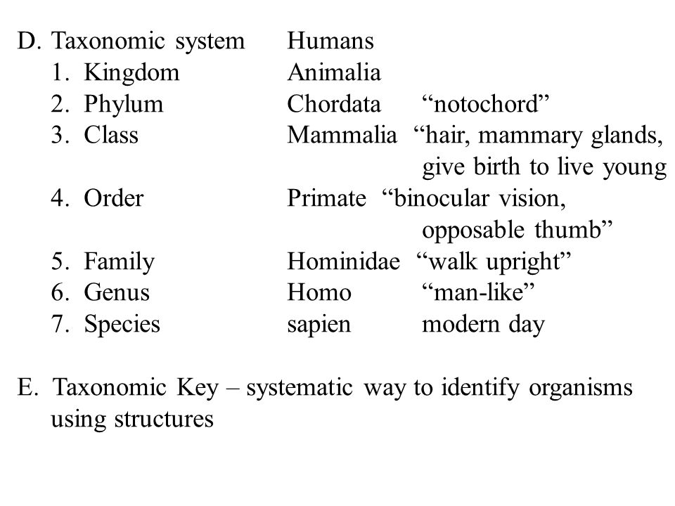 Taxonomic system Humans