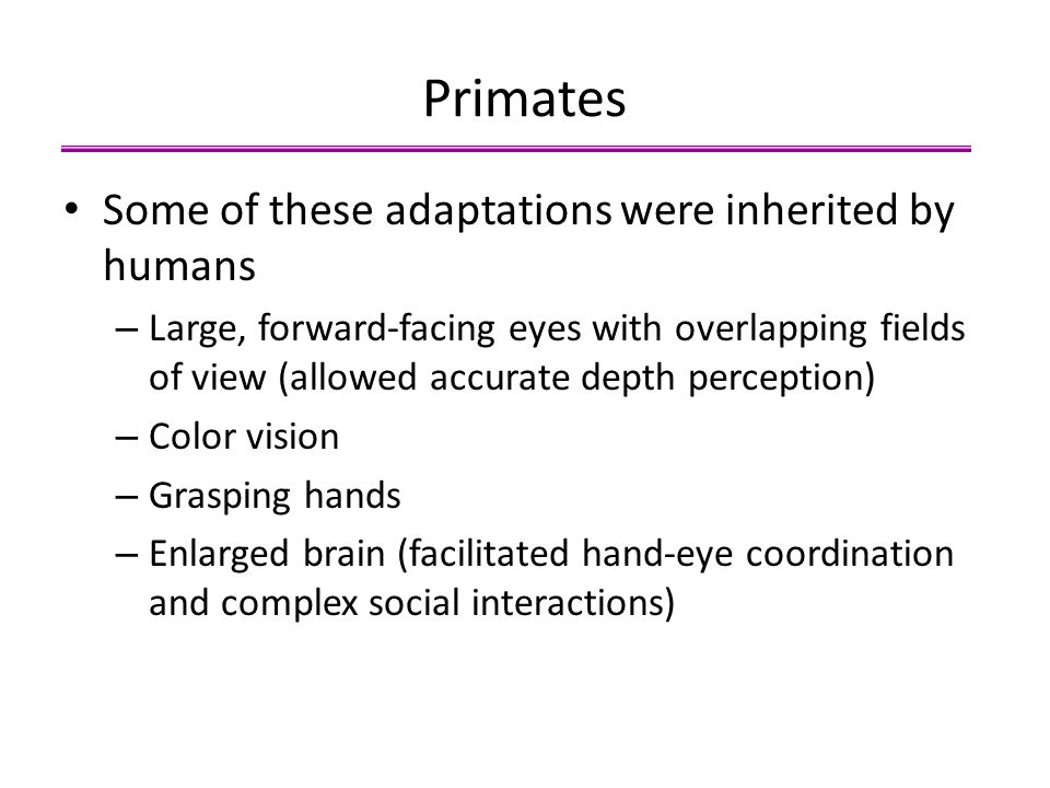 Primates Some of these adaptations were inherited by humans