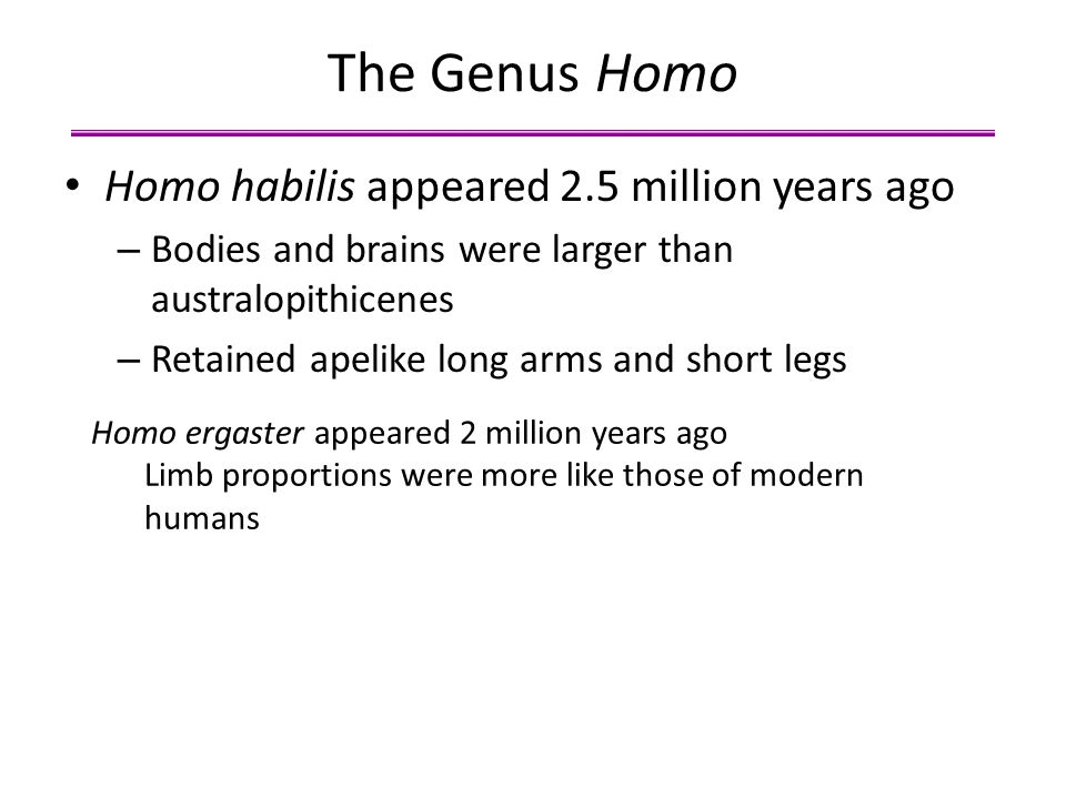 The Genus Homo Homo habilis appeared 2.5 million years ago