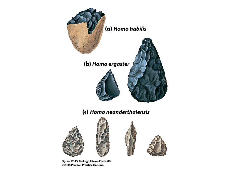 FIGURE 17-15 Representative hominid tools