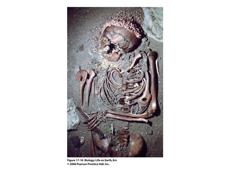 FIGURE 17-16 Paleolithic burial