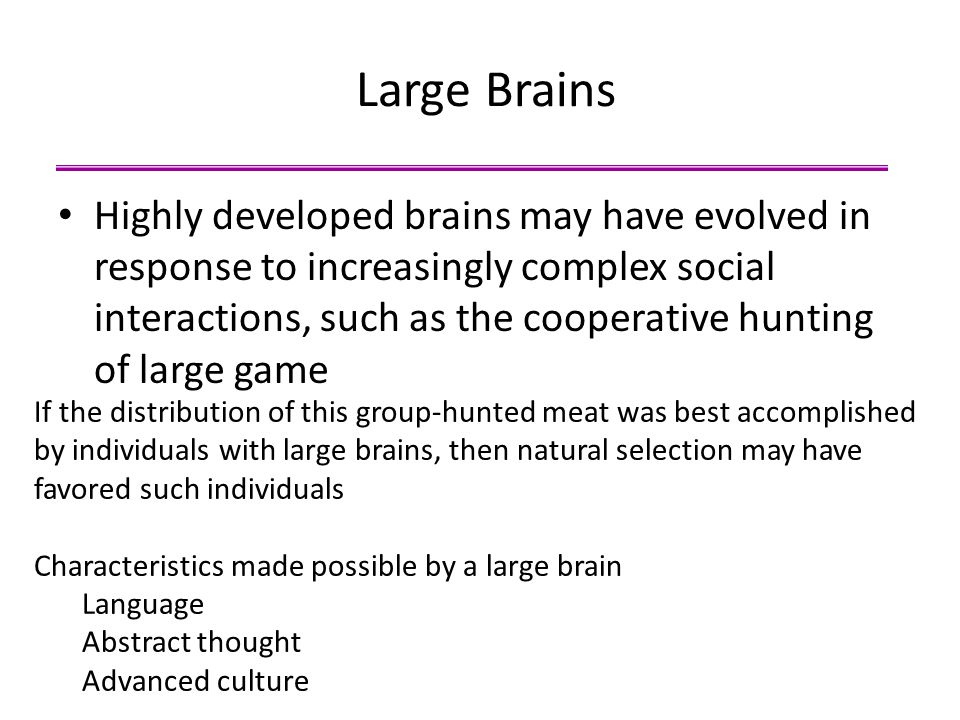 Large Brains