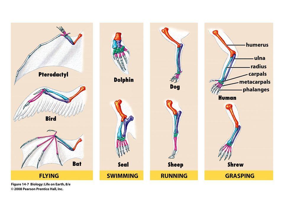 FIGURE 14-7 Homologous structures