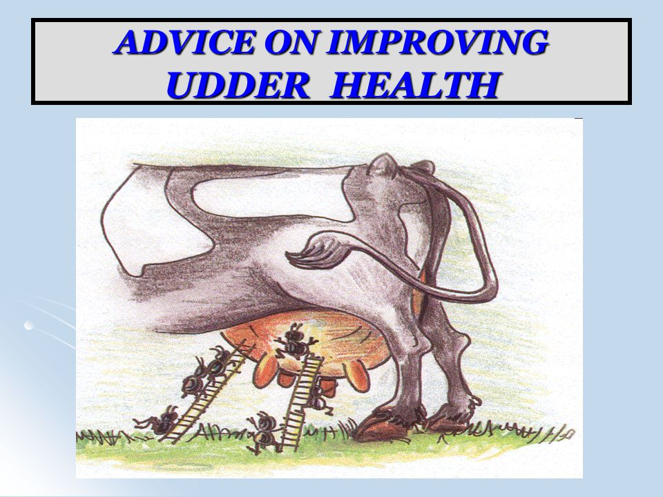 ADVICE ON IMPROVING UDDER HEALTH