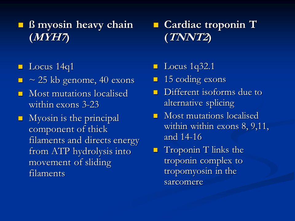 ß myosin heavy chain (MYH7) Cardiac troponin T (TNNT2)