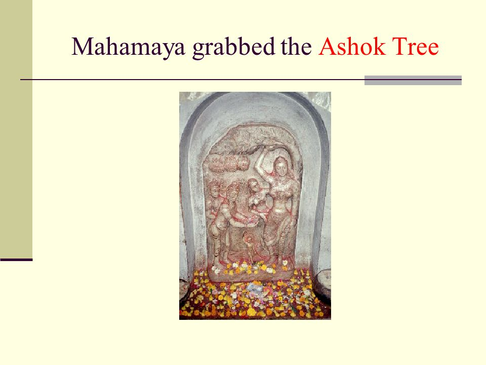 Mahamaya grabbed the Ashok Tree