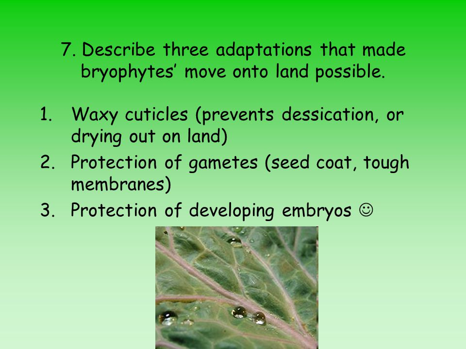 7. Describe three adaptations that made bryophytes' move onto land possible.