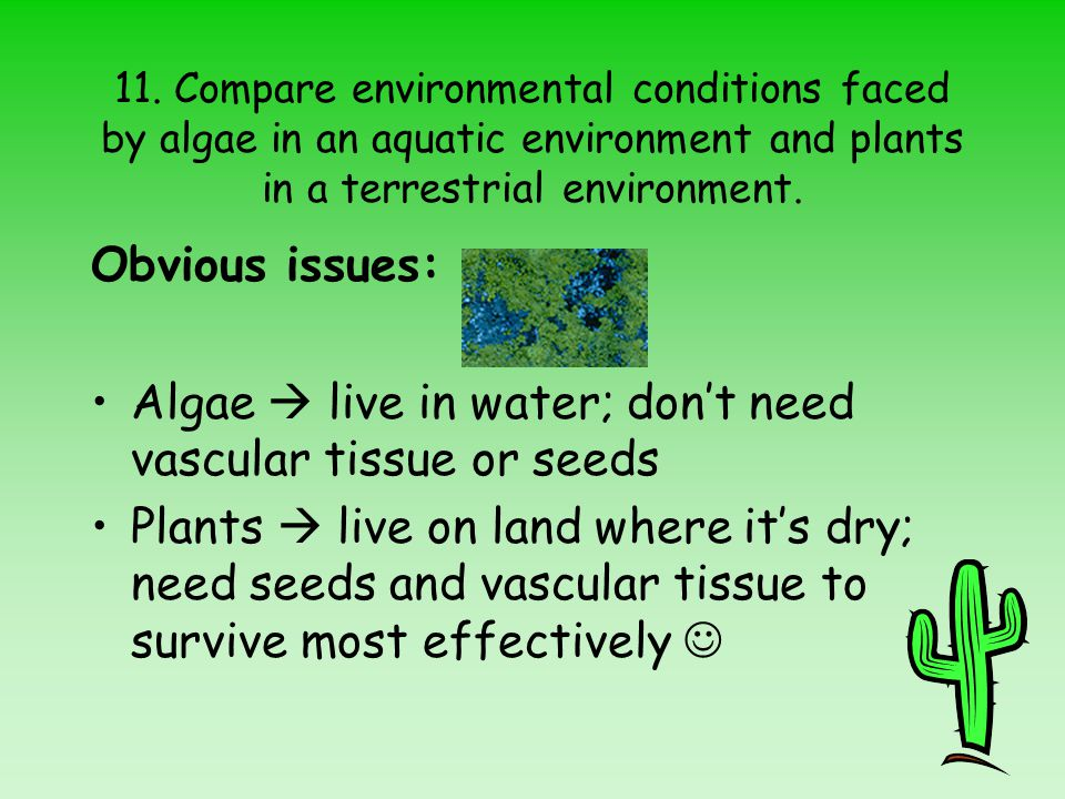Algae  live in water; don't need vascular tissue or seeds