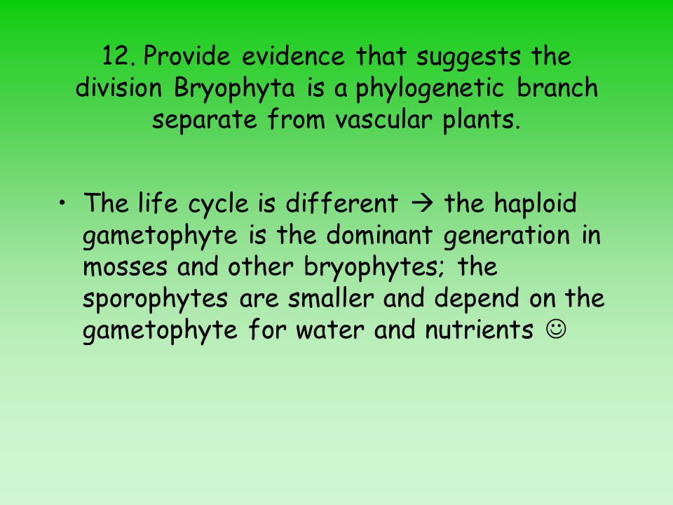 12. Provide evidence that suggests the division Bryophyta is a phylogenetic branch separate from vascular plants.