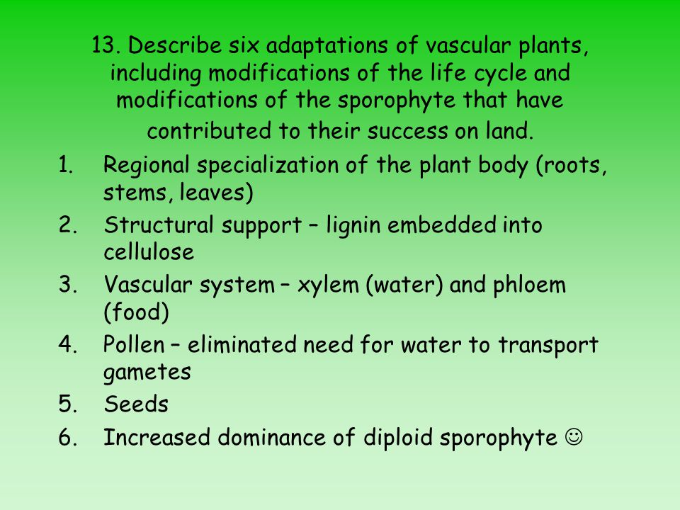 13. Describe six adaptations of vascular plants, including modifications of the life cycle and modifications of the sporophyte that have contributed to their success on land.
