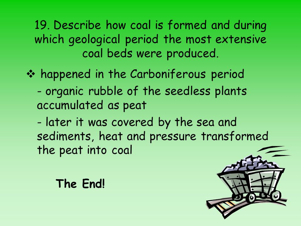 19. Describe how coal is formed and during which geological period the most extensive coal beds were produced.
