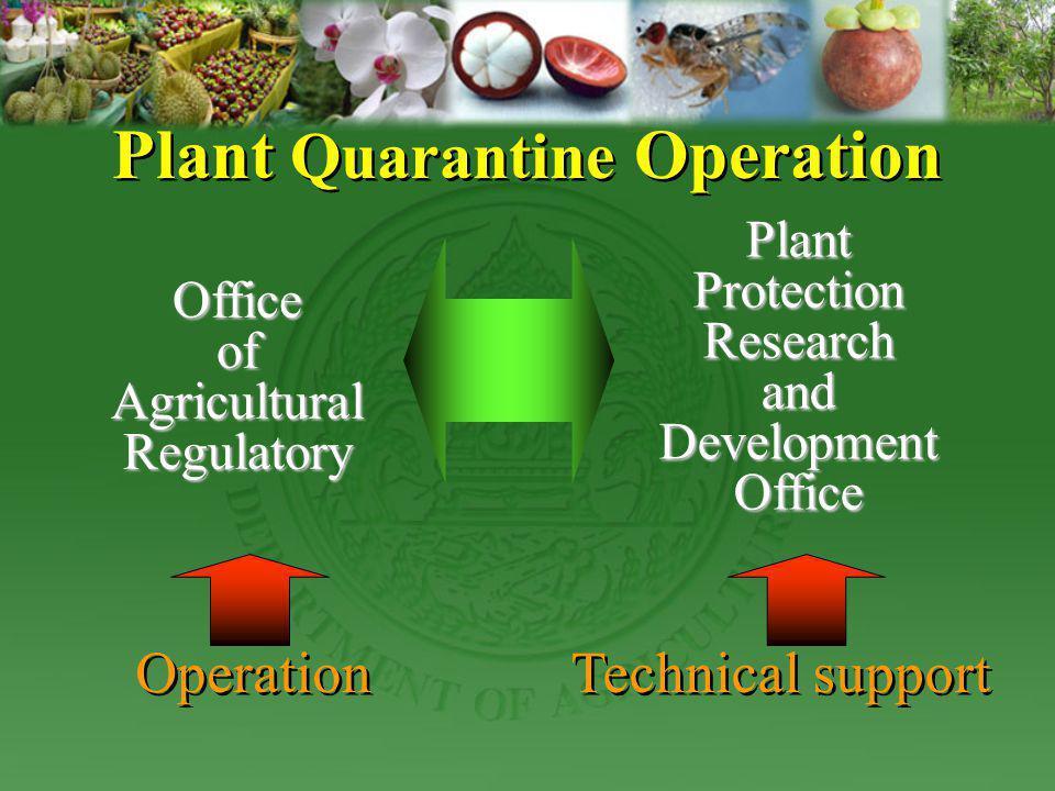 Plant Quarantine Operation