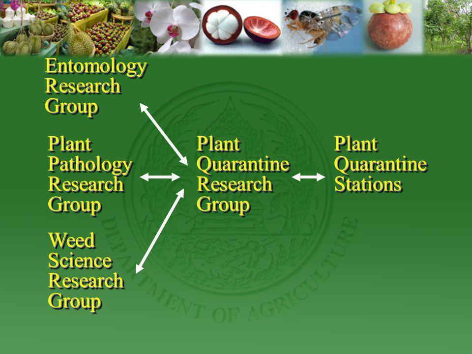 Entomology Research. Group. Plant Pathology. Research. Group. Plant Quarantine. Research. Group.