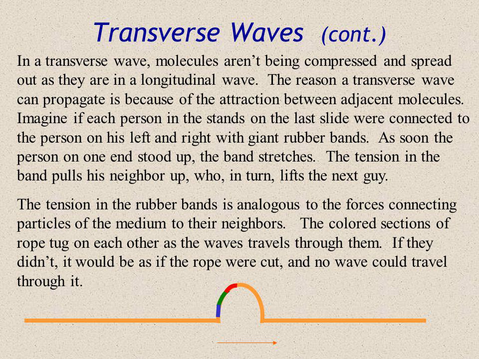 Transverse Waves (cont.)
