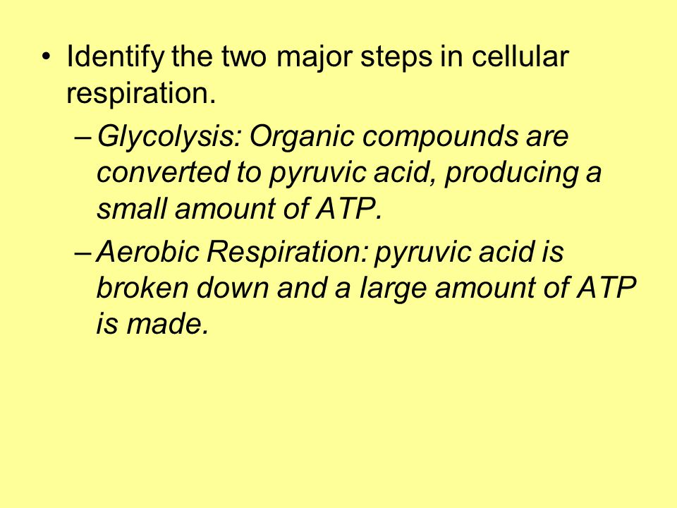 Identify the two major steps in cellular respiration.