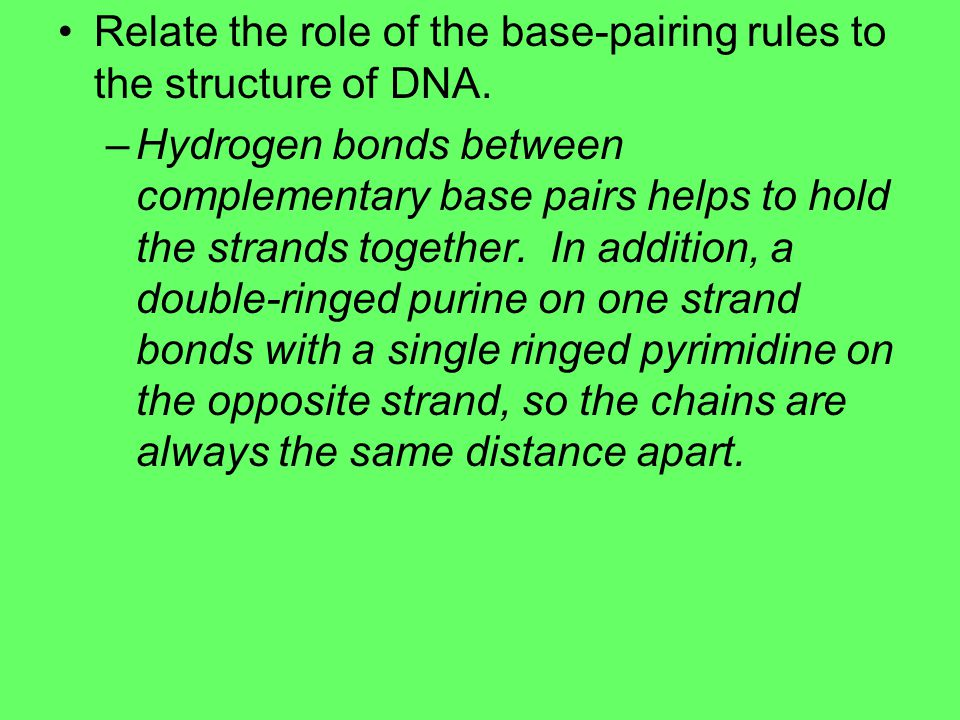 Relate the role of the base-pairing rules to the structure of DNA.