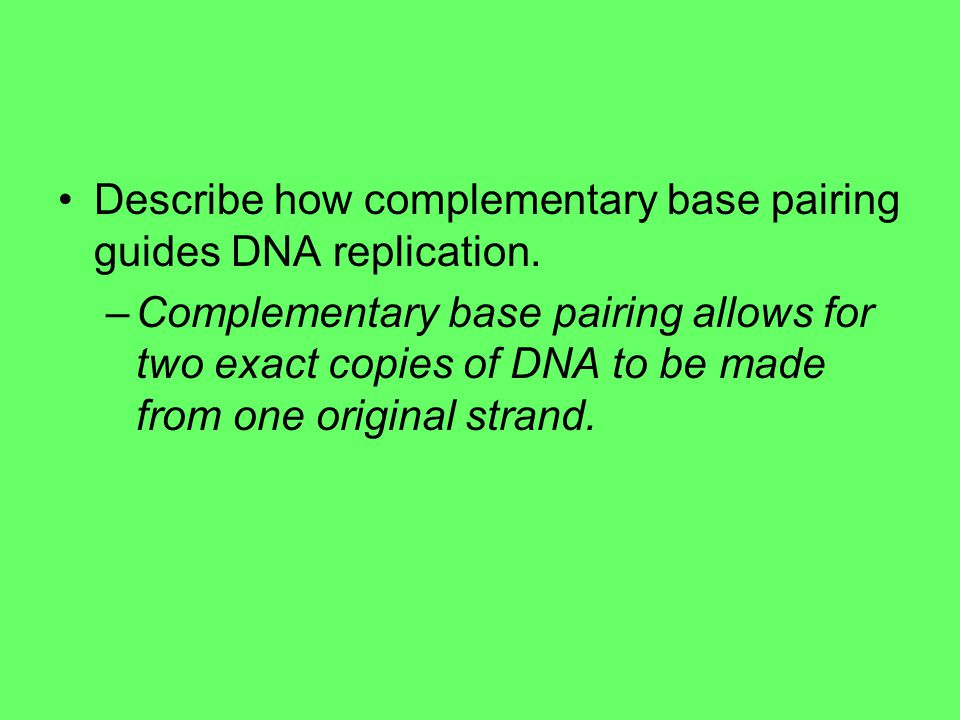 Describe how complementary base pairing guides DNA replication.