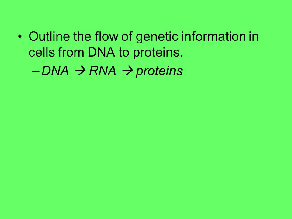 Outline the flow of genetic information in cells from DNA to proteins.