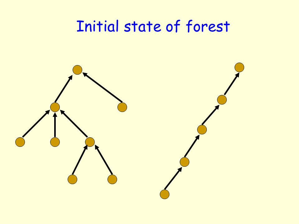 Initial state of forest