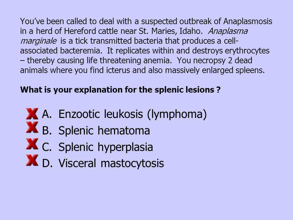 Enzootic leukosis (lymphoma) Splenic hematoma Splenic hyperplasia