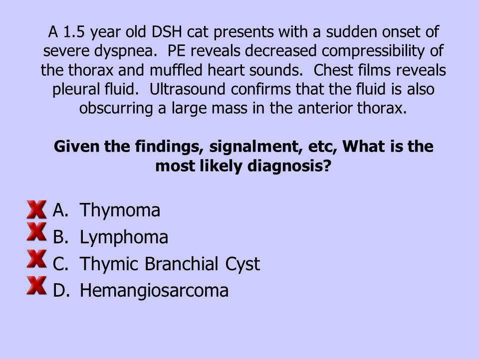 Thymoma Lymphoma Thymic Branchial Cyst Hemangiosarcoma