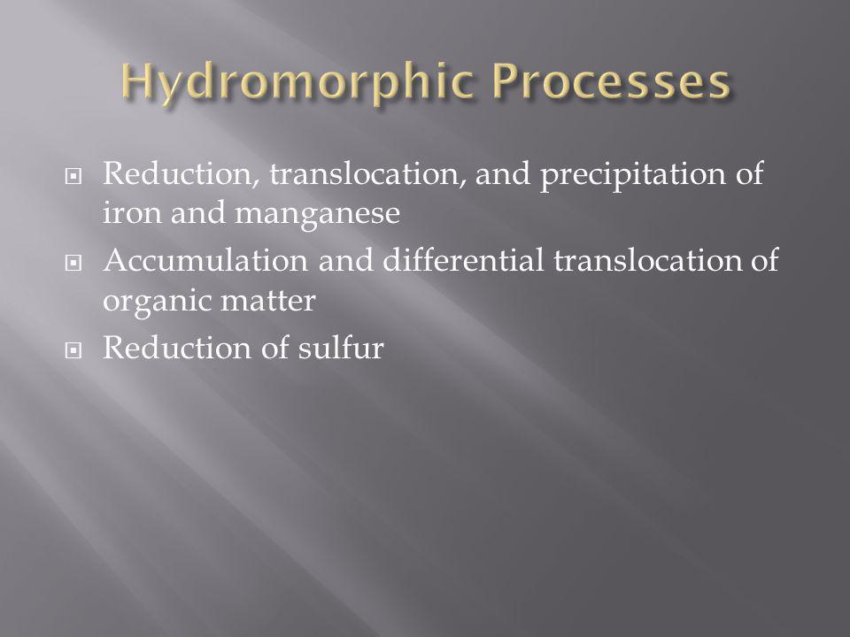 Hydromorphic Processes