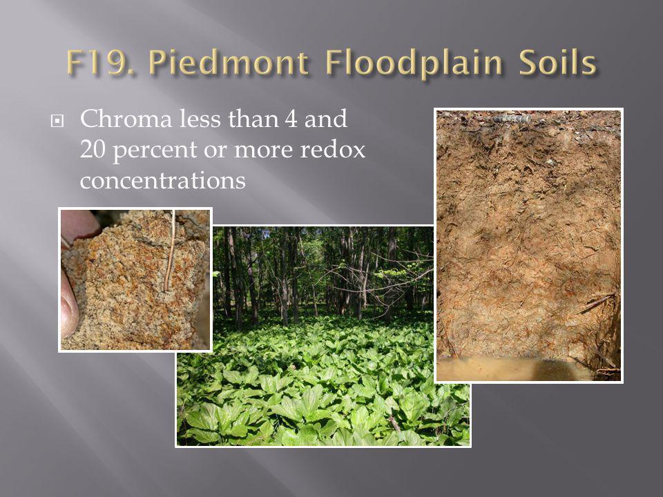 F19. Piedmont Floodplain Soils