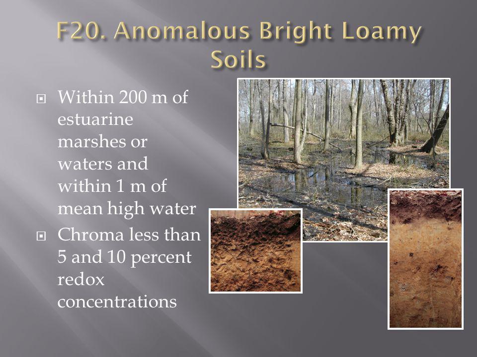 F20. Anomalous Bright Loamy Soils