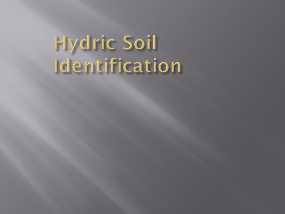 Hydric Soil Identification