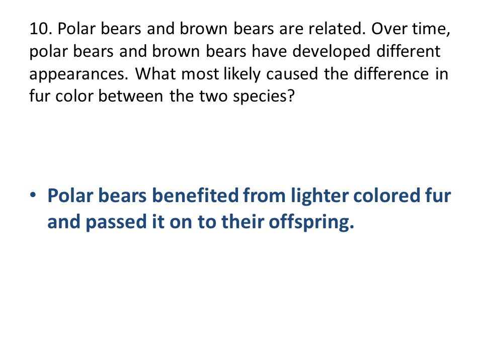 10. Polar bears and brown bears are related