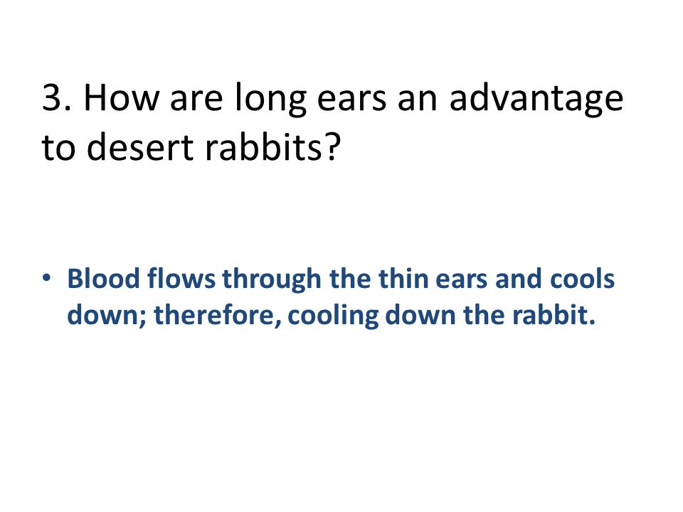3. How are long ears an advantage to desert rabbits
