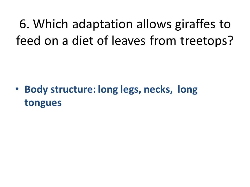 6. Which adaptation allows giraffes to feed on a diet of leaves from treetops