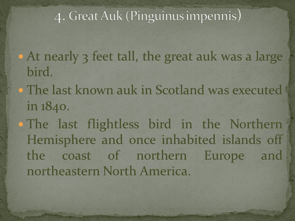 4. Great Auk (Pinguinus impennis)