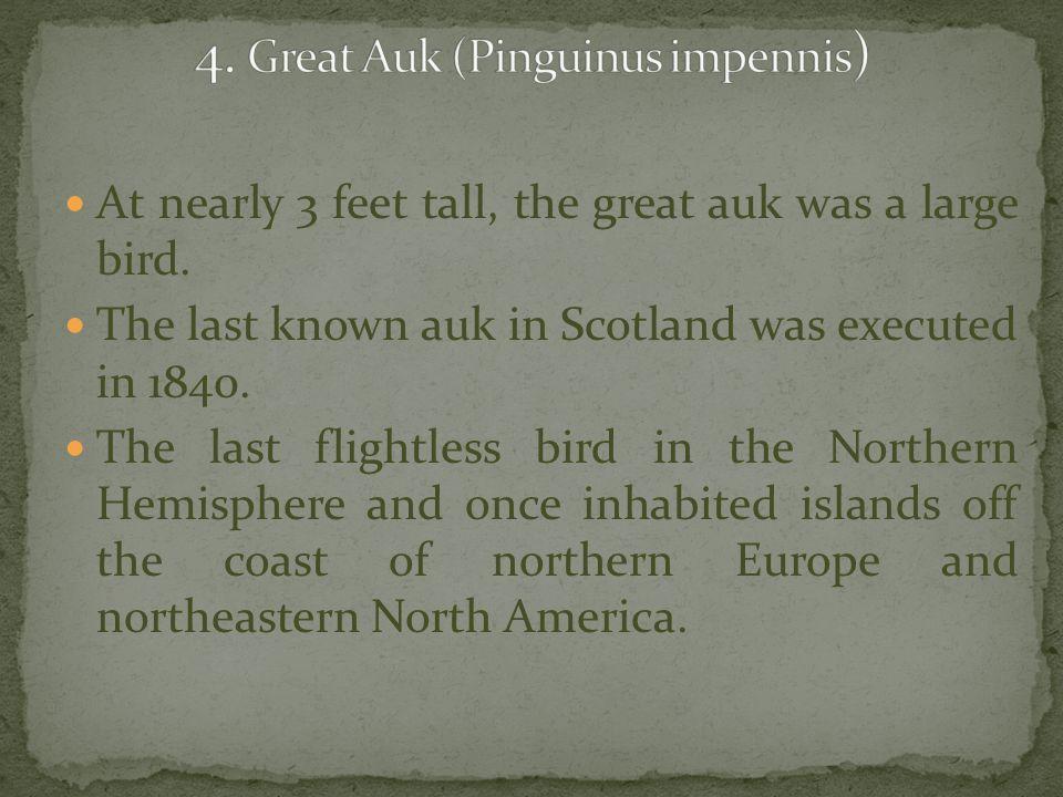 4. Great Auk (Pinguinus impennis)