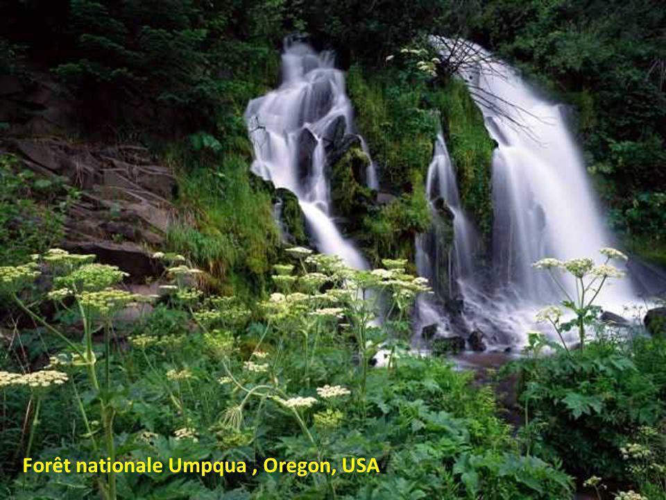 Forêt nationale Umpqua , Oregon, USA