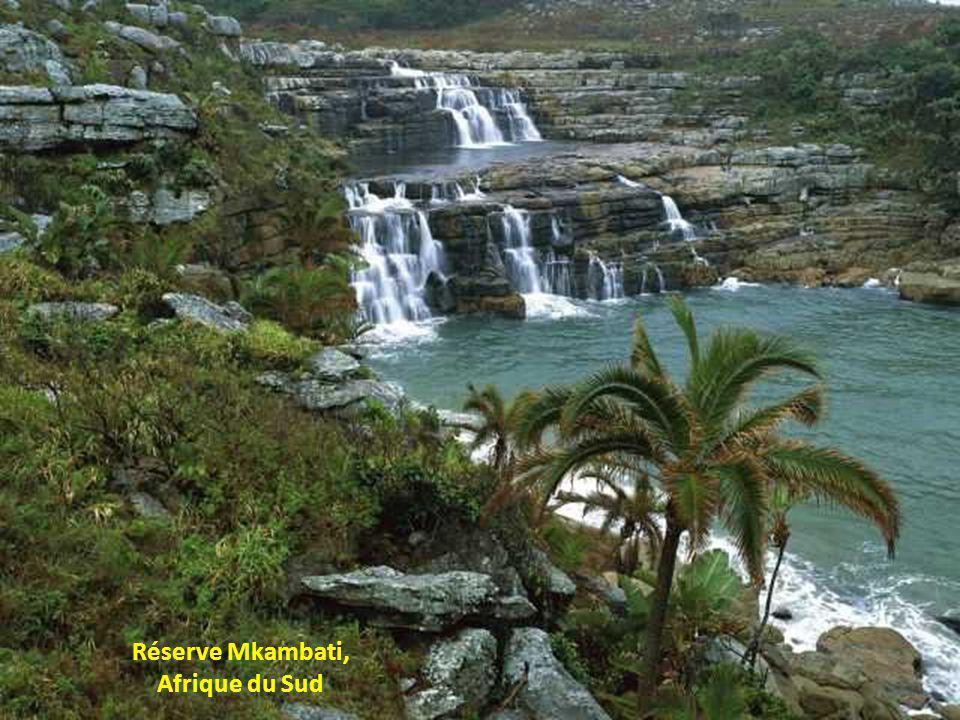 Réserve Mkambati, Afrique du Sud